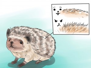 React-when-Your-Hedgehog-Bites-You-Step-17